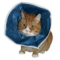 Kruuse защитный воротник для кошек и маленьких