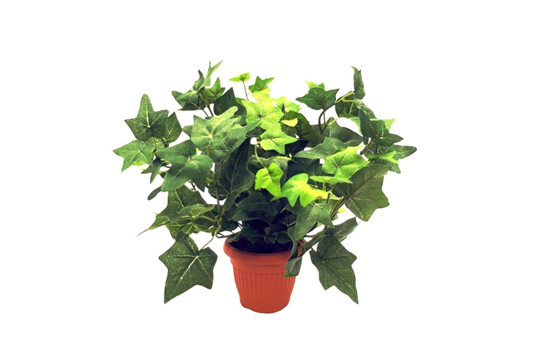 Комнатные растения картинка для детей на прозрачном фоне