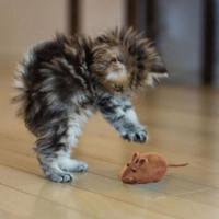 Пискливый звук пищалка жевать игрушку ложных мыши
