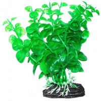 УЮТ Растение аквариумное Бакопа зеленая
