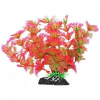 УЮТ Растение аквариумное Амбулия розово зеленая
