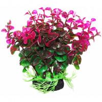 УЮТ Растение аквариумное Бакопа зелено фиолетовая