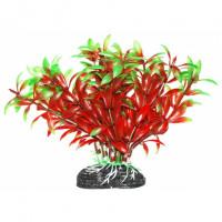 УЮТ Растение аквариумное Людвигия красно зеленая
